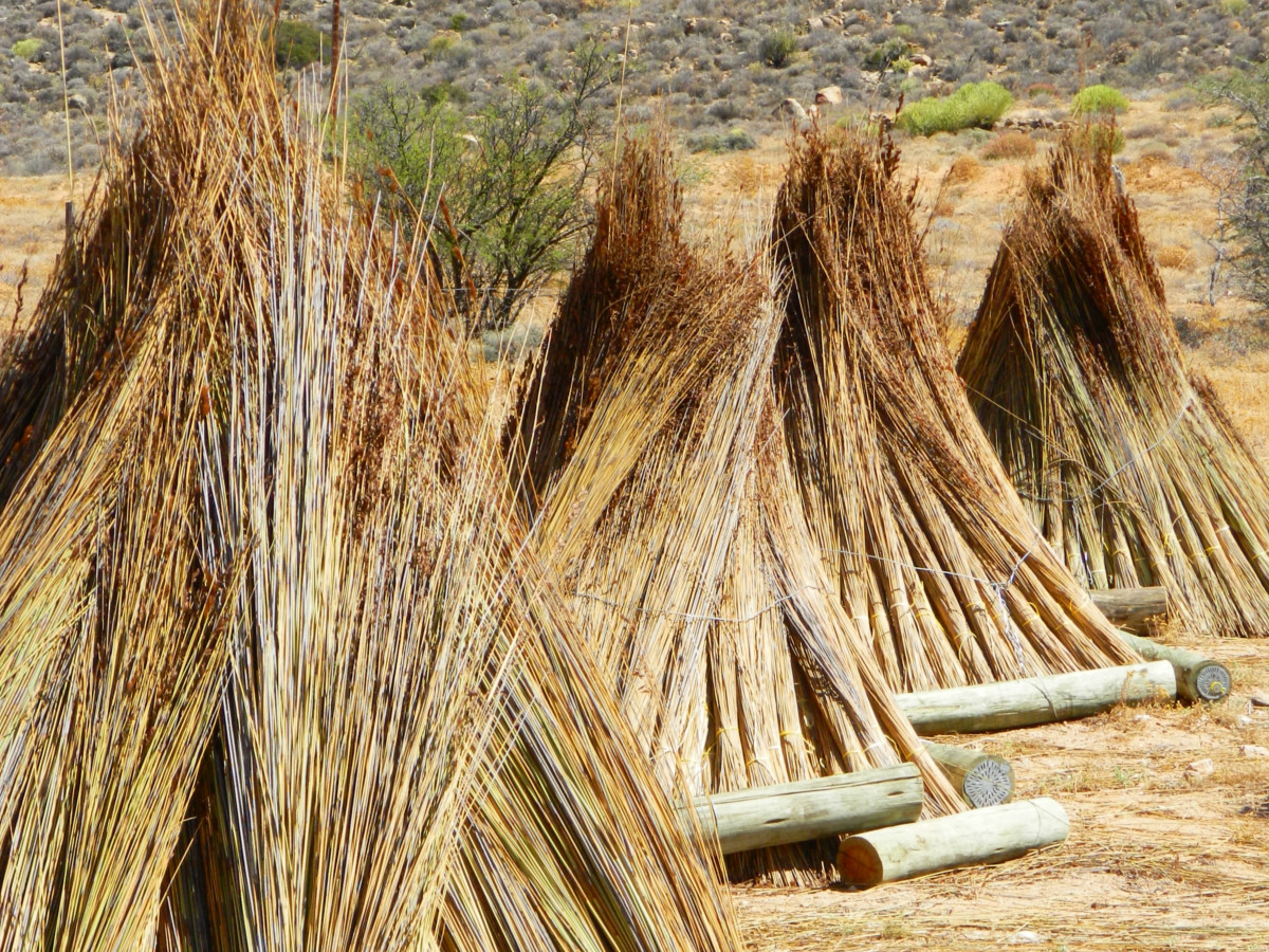 Buy Thatching Reed South Africa